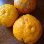 【冬至】今年の冬至(とうじ)は12月22日(火)。どんなものを食べますか?