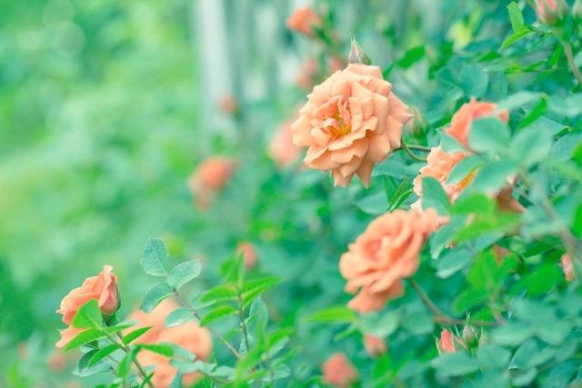 8月お花1