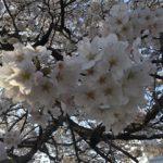 もうすぐ春が来ます。